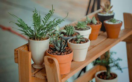 blur-cacti-cactuses-793012